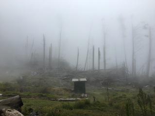 Polipoli Fog